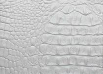 Cocco Conchiglia-Bianco